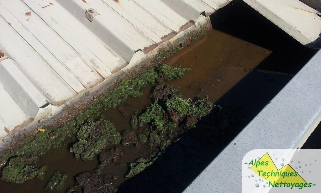 Poisy accueil alpes techniques nettoyages for Algue rouge piscine